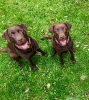 Mia und Lucy_2